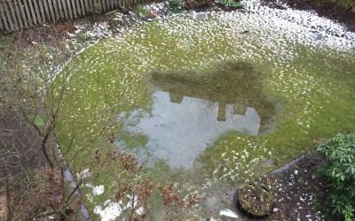 Drikker hagen din nok?