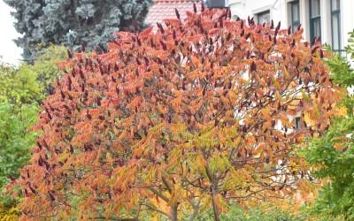 Er hager og parker miljøsvin?