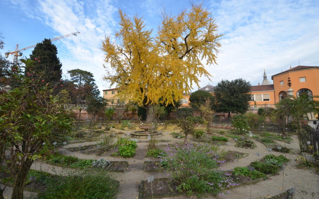 Botaniske hage i Padova Italia