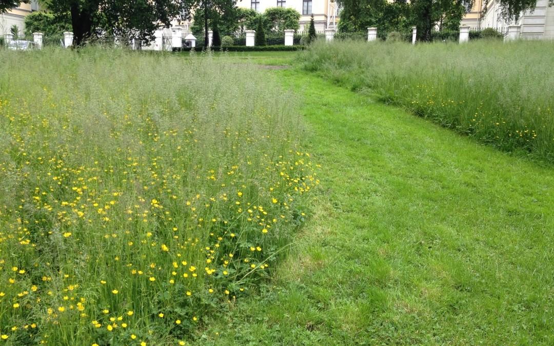Enger i byparker – helt på jordet?